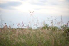 Pré de forêt avec les herbes sauvages Image stock