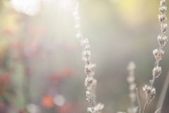 Pré de forêt avec les herbes sauvages au coucher du soleil Images stock