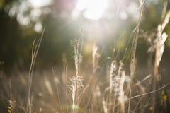 Pré de forêt avec les herbes sauvages au coucher du soleil Photos stock