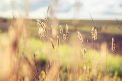 Pré de forêt avec les herbes sauvages au coucher du soleil Photo libre de droits