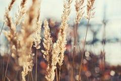 Pré de forêt avec les herbes sauvages au coucher du soleil Photos libres de droits