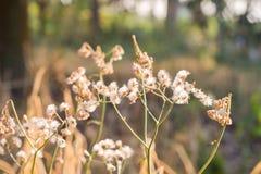 Pré de forêt avec les herbes sauvages, macro image avec la petite profondeur de Photo stock