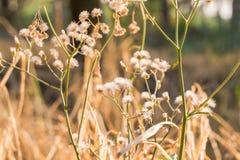 Pré de forêt avec les herbes sauvages, macro image avec la petite profondeur de Image stock