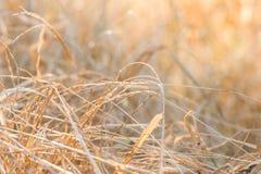 Pré de forêt avec les herbes sauvages, macro image avec la petite profondeur de Photographie stock