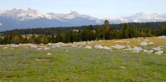 Pré de haute montagne Photo libre de droits