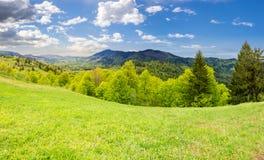 Pré de Hillside près de forêt en montagne Photos stock