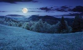 Pré de Hillside près de forêt en montagne la nuit Photos stock