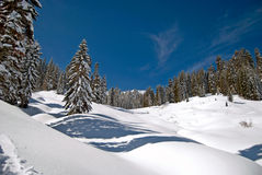 Pré de l'hiver Photo stock