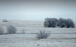 Pré de l'hiver avec des arbres Images stock