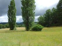 Pré de la Provence Photo libre de droits