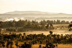 Pré de la savane et forêt de pin Image libre de droits