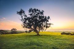 Pré de lever de soleil photographie stock libre de droits