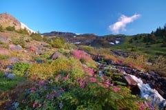 Pré de montagne Photo libre de droits