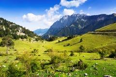 Pré a de montagne Image libre de droits