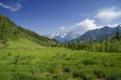 Pré de montagne Photographie stock libre de droits