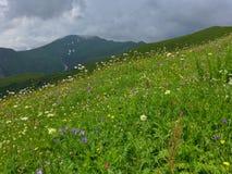 Pré de montagne Image libre de droits