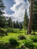 Pré de montagne au printemps photographie stock libre de droits