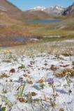 Pré de montagne le matin après la chute de neige importante Images stock