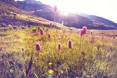 Pré de montagnes photo libre de droits