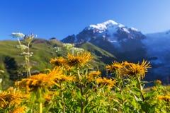 Pré de montagnes photos stock