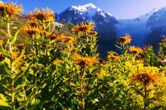 Pré de montagnes photographie stock libre de droits