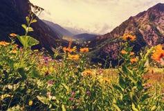 Pré de montagnes Images libres de droits