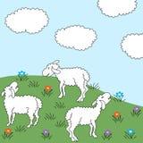 Pré de moutons Photos libres de droits