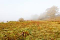 Pré de plage avec le brouillard Photographie stock