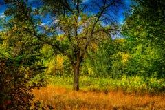 Pré de région boisée dans le changement tôt de saison d'automne images stock