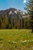 Pré de région sauvage rempli de wildflowers et de crête de montagne blancs images stock