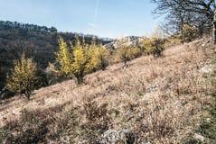 Pré de ressort avec des usines de MAS de cornus de flowerings en montagnes de Palava en Moravie du sud Images libres de droits