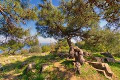 Pré de ressort avec l'arbre vert, l'herbe, les roches et le ciel bleu d'espace libre en haut des montagnes d'île de Buyukada, Ist Photo stock
