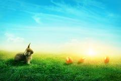 Pré de ressort avec un lapin Photos stock
