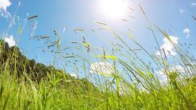 Pré de ressort dans le vent et le soleil clips vidéos