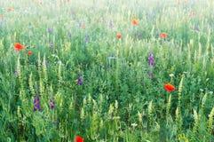 Pré de ressort de la fleur violette images libres de droits