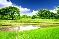 Pré de riz Photographie stock