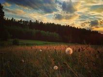Pré de soirée sous les nuages /1 photographie stock libre de droits