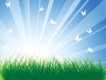 Pré de source avec l'herbe verte Images stock
