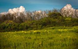 Pré de source avec les fleurs jaunes Photos stock