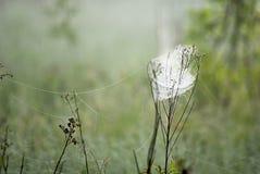 Pré de toile d'araignée Photo stock
