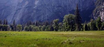 Pré de Tuolumne - Yosemite Photos libres de droits