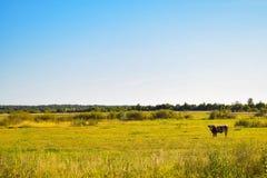 Pré de vache Image libre de droits