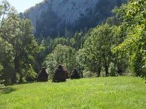 Pré de vert de paysage de montagne Photographie stock libre de droits