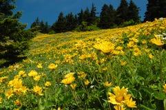 Pré de Wildflower Images libres de droits