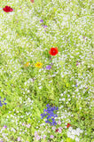Pré de Wildflower Photo stock