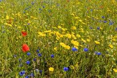 Pré de Wildflower, Worcestershire, Angleterre Images libres de droits