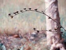 Pré de Wildflowers dans le domaine, foyer sélectif, l'espace dans la zone brouillant, fond sensible de vintage Photographie stock