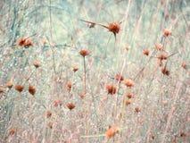 Pré de Wildflowers dans le domaine, foyer sélectif, l'espace dans la zone brouillant, fond sensible de vintage Photos libres de droits