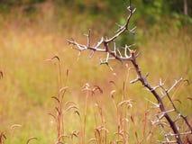 Pré de Wildflowers dans le domaine, foyer sélectif, l'espace dans le flou de zone Photographie stock libre de droits
