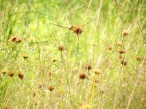 Pré de Wildflowers dans le domaine, foyer sélectif, l'espace dans le flou de zone Images stock